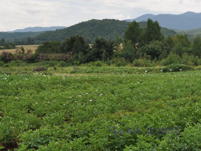 poljoprivredno mjesto za pronalazak izlazi nakon 50 blogova